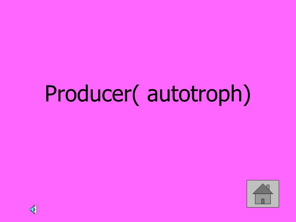 Producer( autotroph)