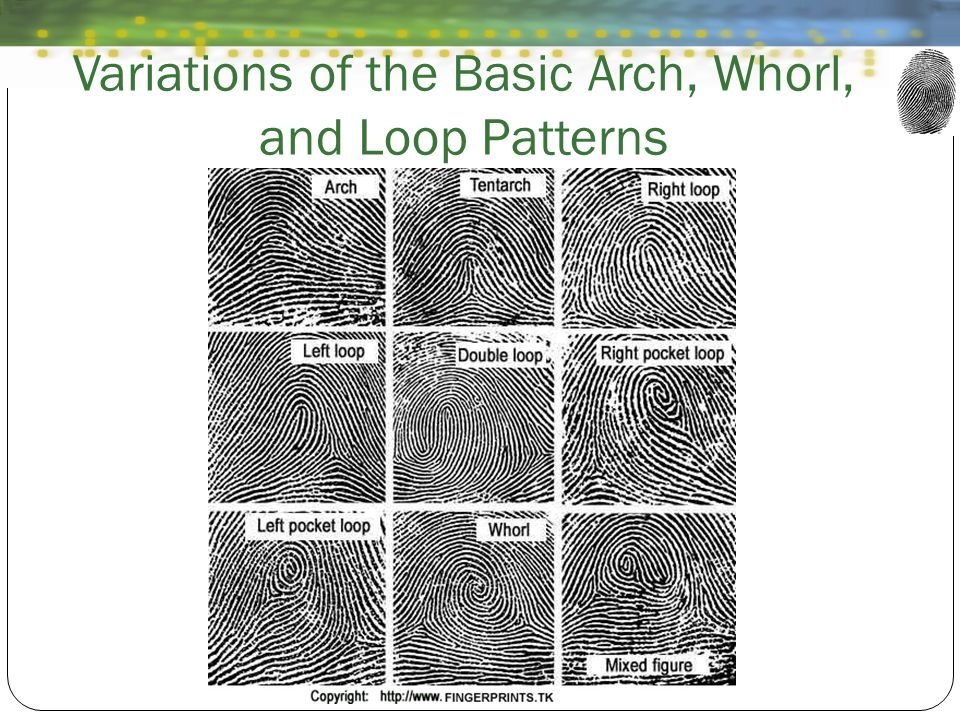 Variations of the Basic Arch, Whorl, and Loop Patterns