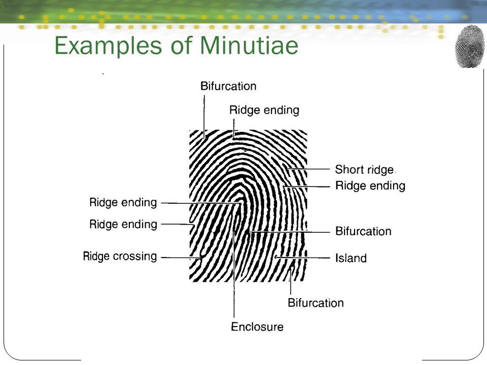 Examples of Minutiae