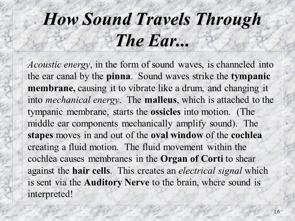 16 How Sound Travels Through The Ear... Acoustic energy, in the form of sound waves, is channeled into the ear canal by the pinna. Sound waves strike