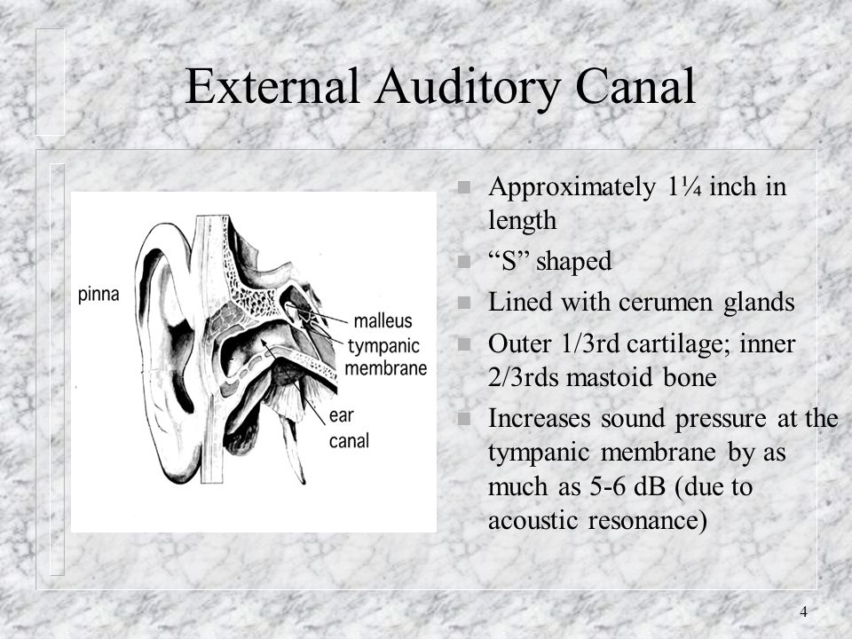 4 External Auditory Canal n Approximately 1¼ inch in length n S shaped n Lined with cerumen glands n Outer 1/3rd cartilage; inner 2/3rds mastoid bone