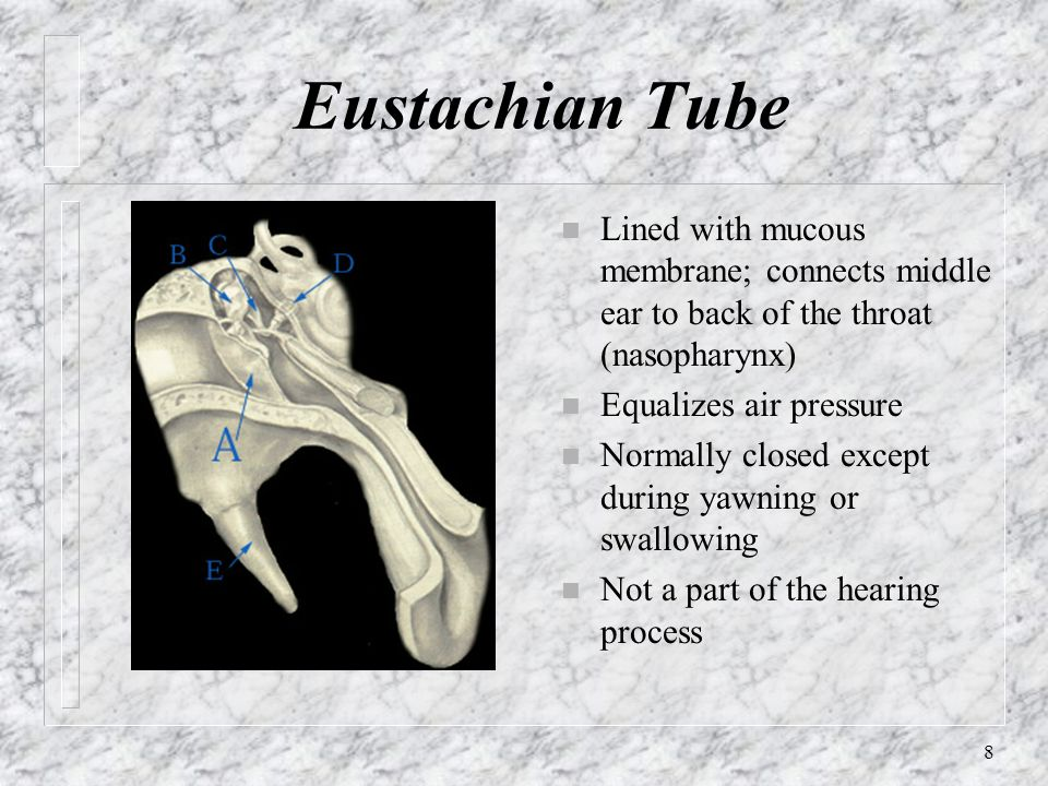 8 Eustachian Tube n Lined with mucous membrane; connects middle ear to back of the throat (nasopharynx) n Equalizes air pressure n Normally closed exc