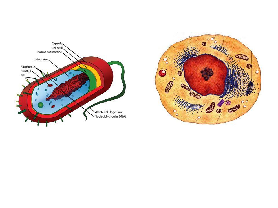 Endomembrane System Vesicles
