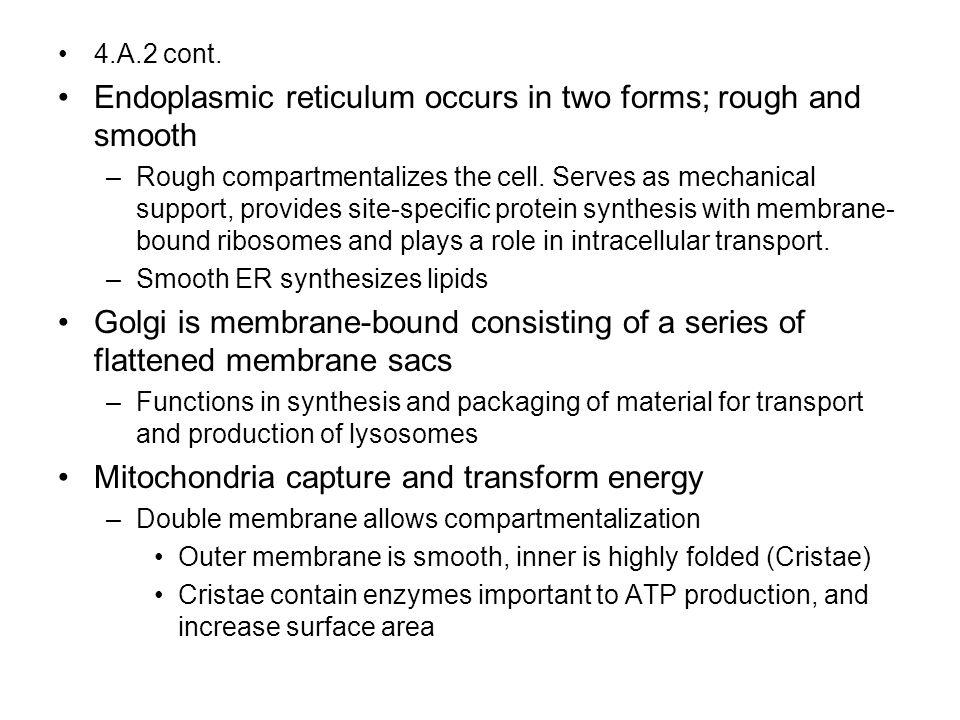 Nucleus DNA Nuclear envelope Nucleolus