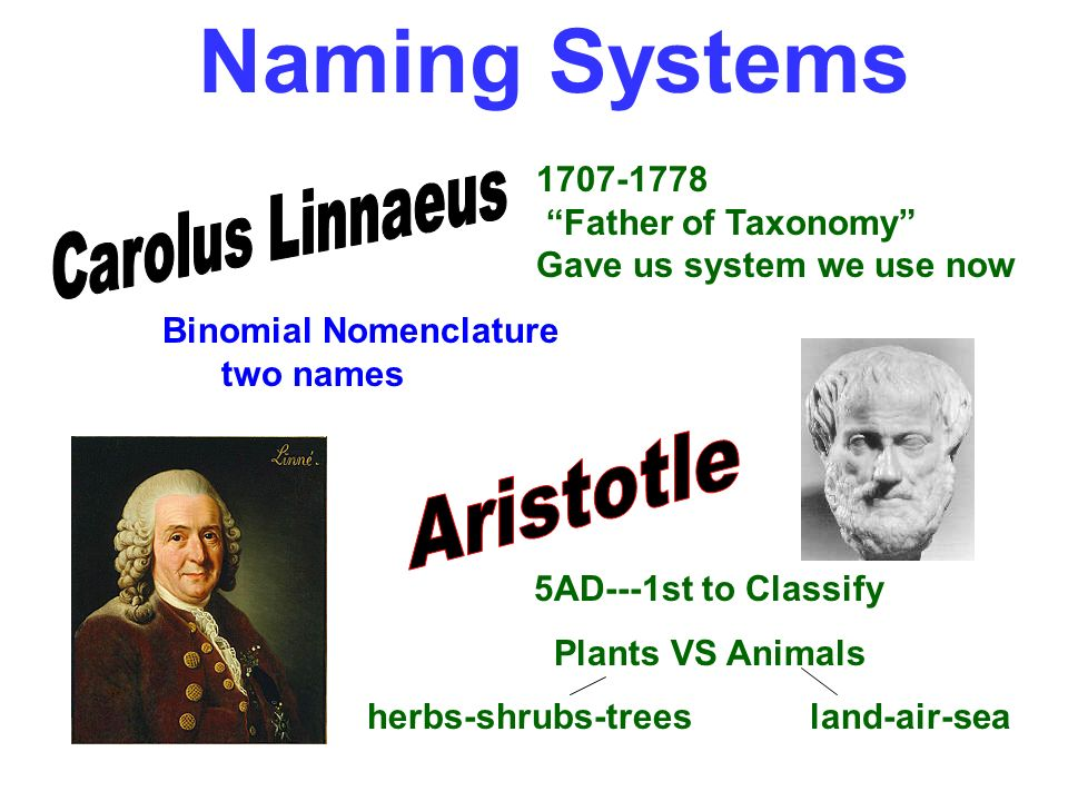 Naming Systems 5AD---1st to Classify Plants VS Animals herbs-shrubs-trees land-air-sea 1707-1778 Father of Taxonomy Gave us system we use now Binomial
