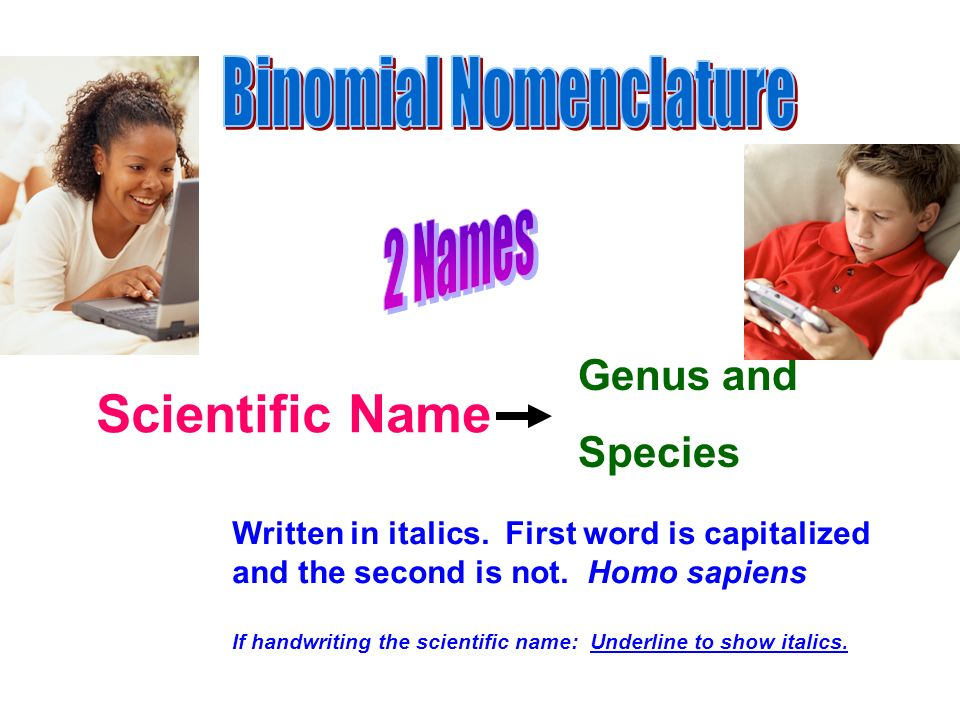 Scientific Name Genus and Species Written in italics. First word is capitalized and the second is not. Homo sapiens If handwriting the scientific name