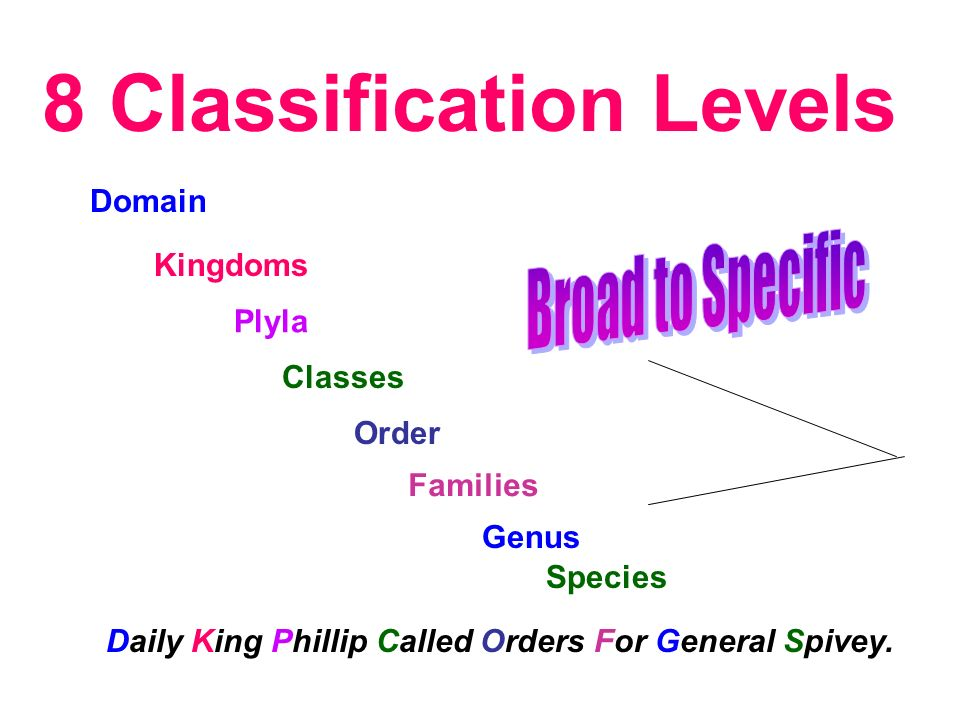 8 Classification Levels Domain Kingdoms Plyla Classes Order Families Genus Species Daily King Phillip Called Orders For General Spivey.