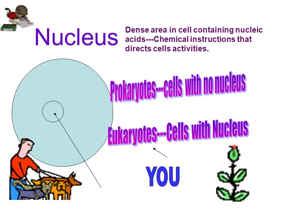Nucleus D e n s e a r e a i n a c e l l t h a t c o n t a i n s n u c l e i c a c i d s - - - c h e m i c a l i n s t r u c t i o n s t h a t d i r e