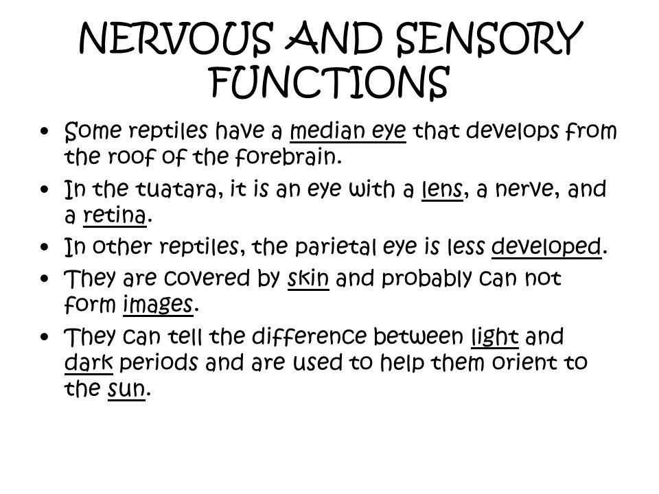 NERVOUS AND SENSORY FUNCTIONS Some reptiles have a median eye that develops from the roof of the forebrain. In the tuatara, it is an eye with a lens,