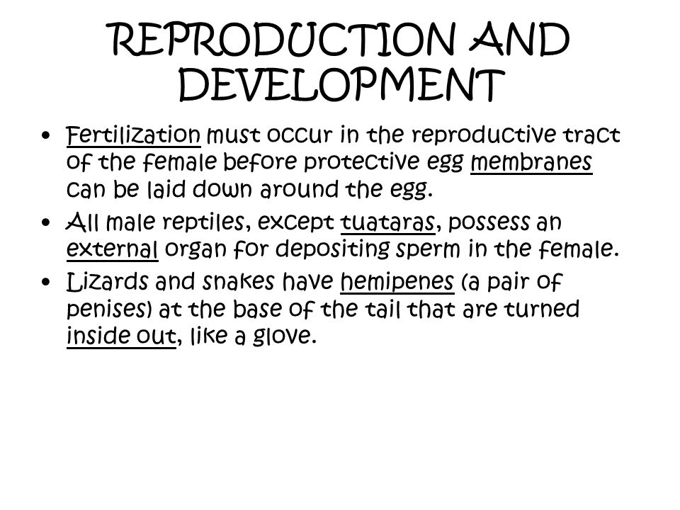 REPRODUCTION AND DEVELOPMENT Fertilization must occur in the reproductive tract of the female before protective egg membranes can be laid down around
