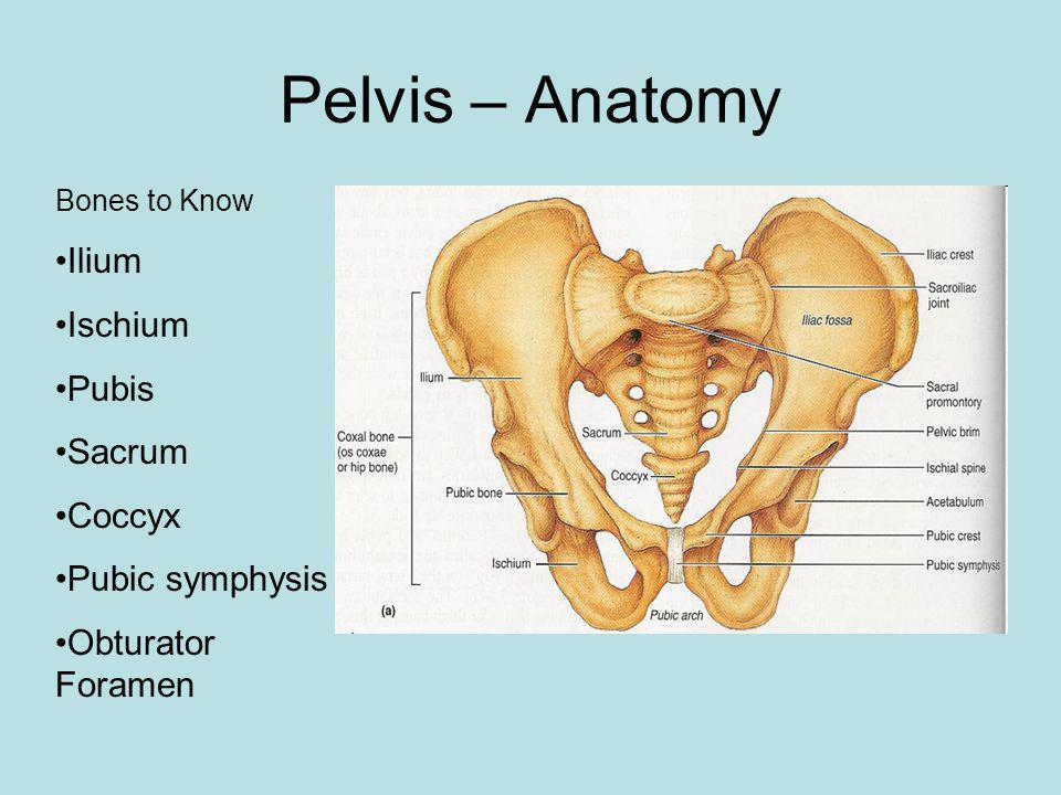 Pelvis – Anatomy Bones to Know Ilium Ischium Pubis Sacrum Coccyx Pubic symphysis Obturator Foramen