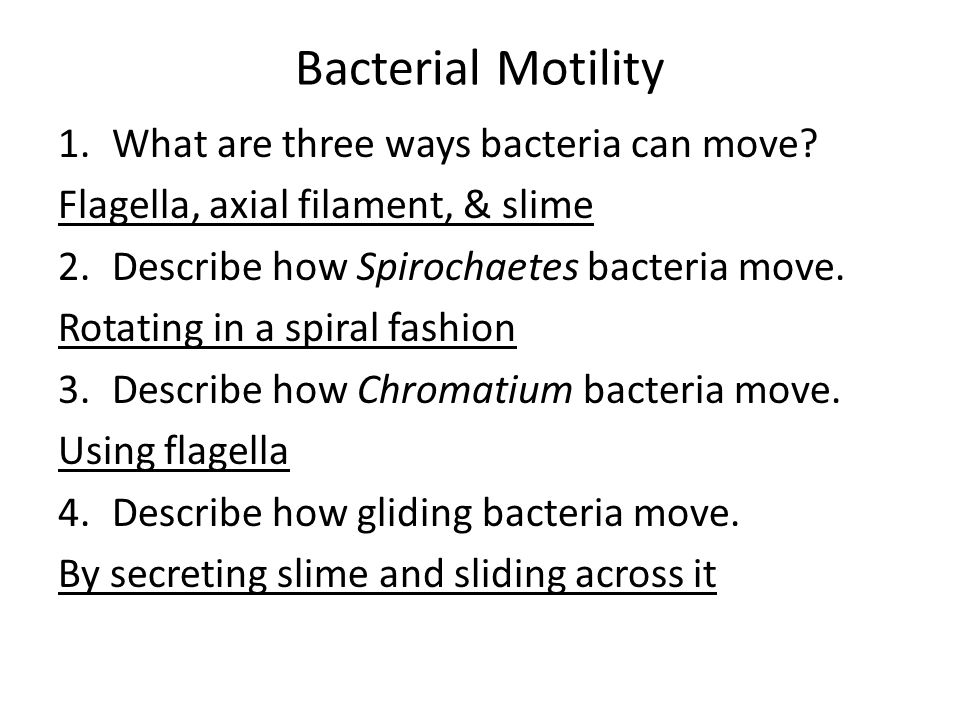 Bacterial Motility 1.What are three ways bacteria can move? Flagella, axial filament, & slime 2.Describe how Spirochaetes bacteria move. Rotating in a