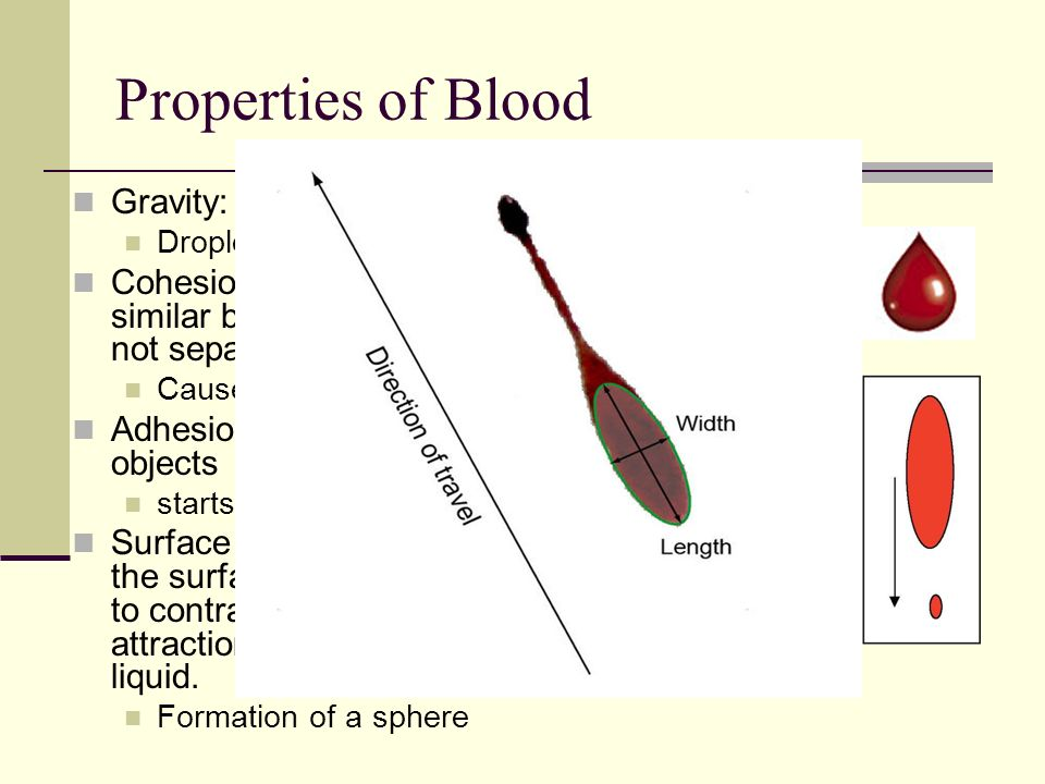 Properties of Blood Gravity: pulls it to ground Droplet becomes longer than wide Cohesion: blood mixture is attracted to similar blood mixtures and st