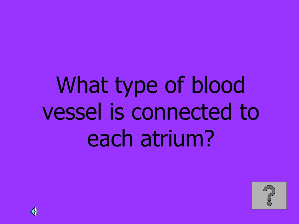 What type of blood vessel is connected to each atrium?