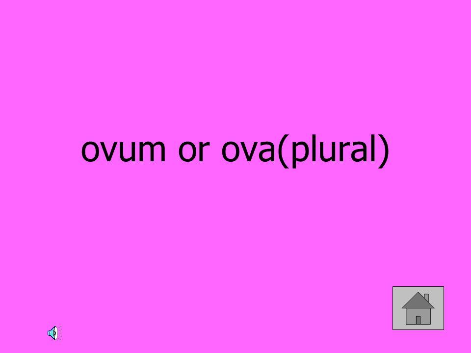 ovum or ova(plural)
