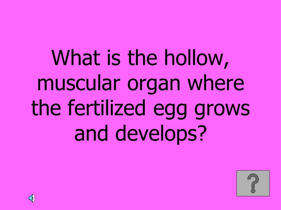 What is the hollow, muscular organ where the fertilized egg grows and develops?
