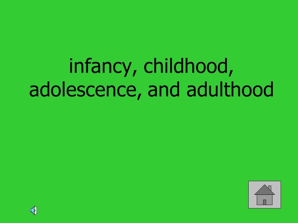infancy, childhood, adolescence, and adulthood
