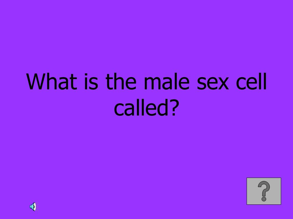 What is the male sex cell called?
