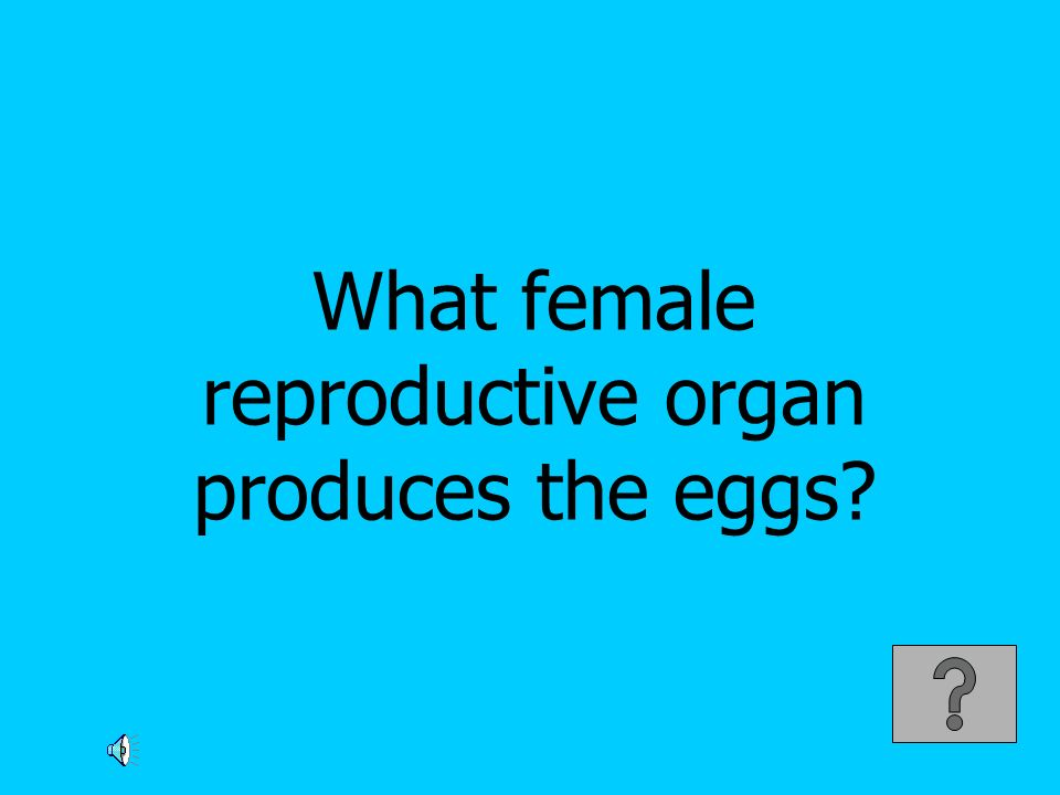 What female reproductive organ produces the eggs?