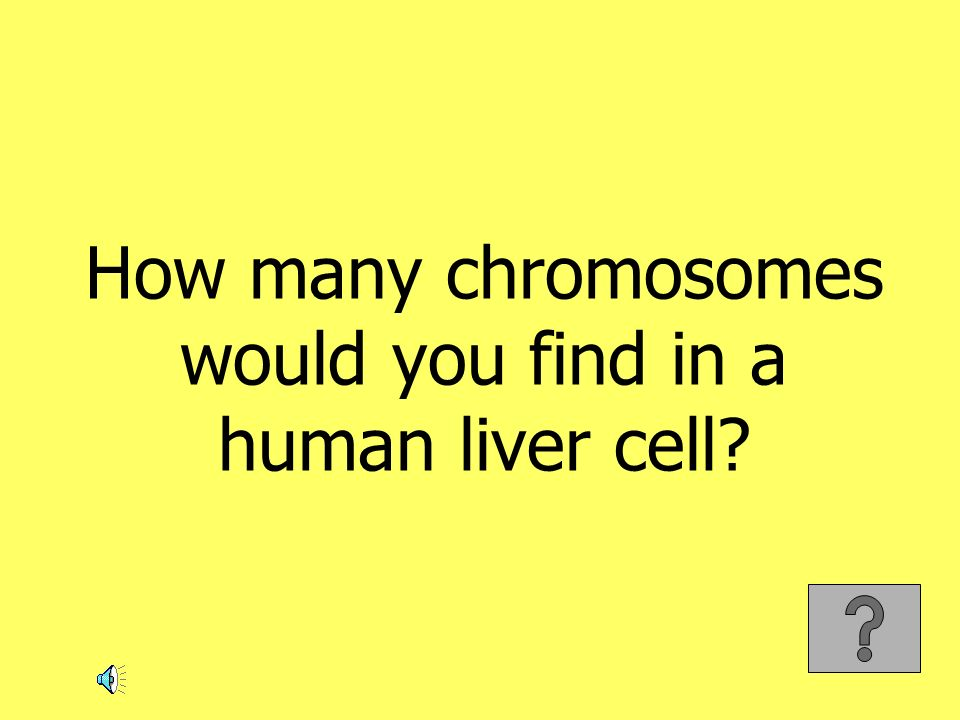 How many chromosomes would you find in a human liver cell?