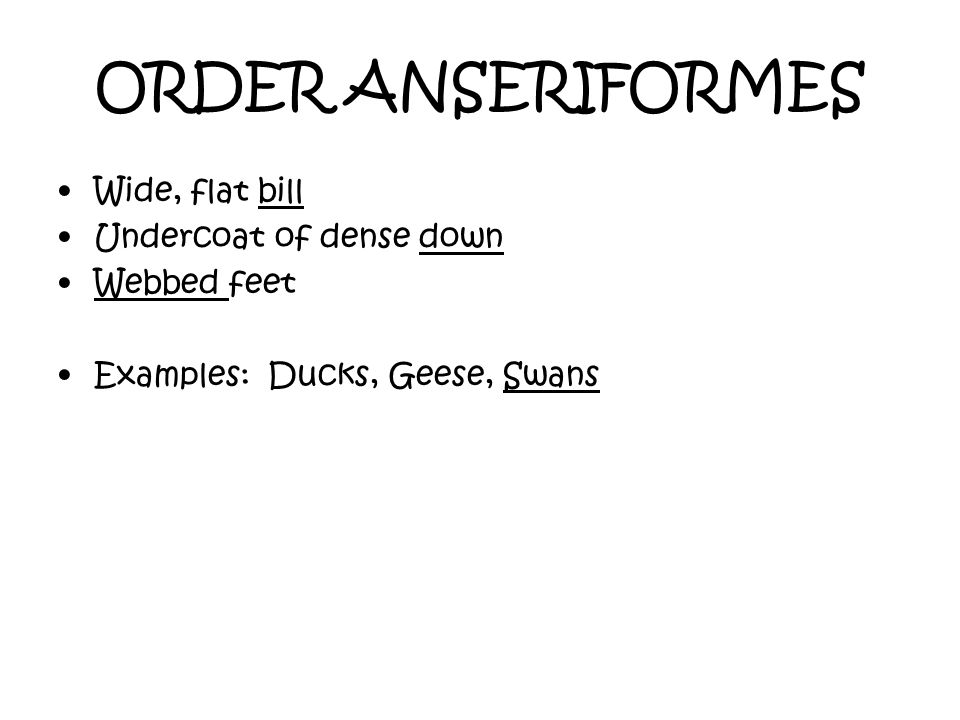 ORDER ANSERIFORMES Wide, flat bill Undercoat of dense down Webbed feet Examples: Ducks, Geese, Swans