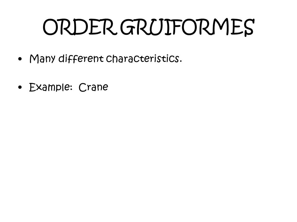 ORDER GRUIFORMES Many different characteristics. Example: Crane