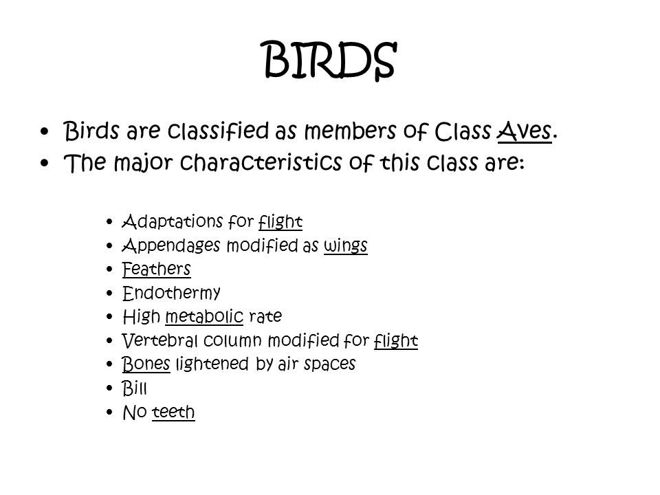 BIRDS Birds are classified as members of Class Aves. The major characteristics of this class are: Adaptations for flight Appendages modified as wings