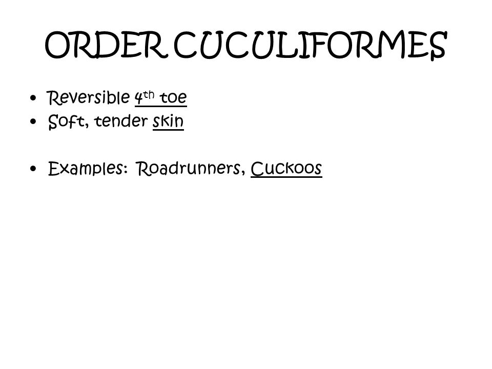 ORDER CUCULIFORMES Reversible 4 th toe Soft, tender skin Examples: Roadrunners, Cuckoos