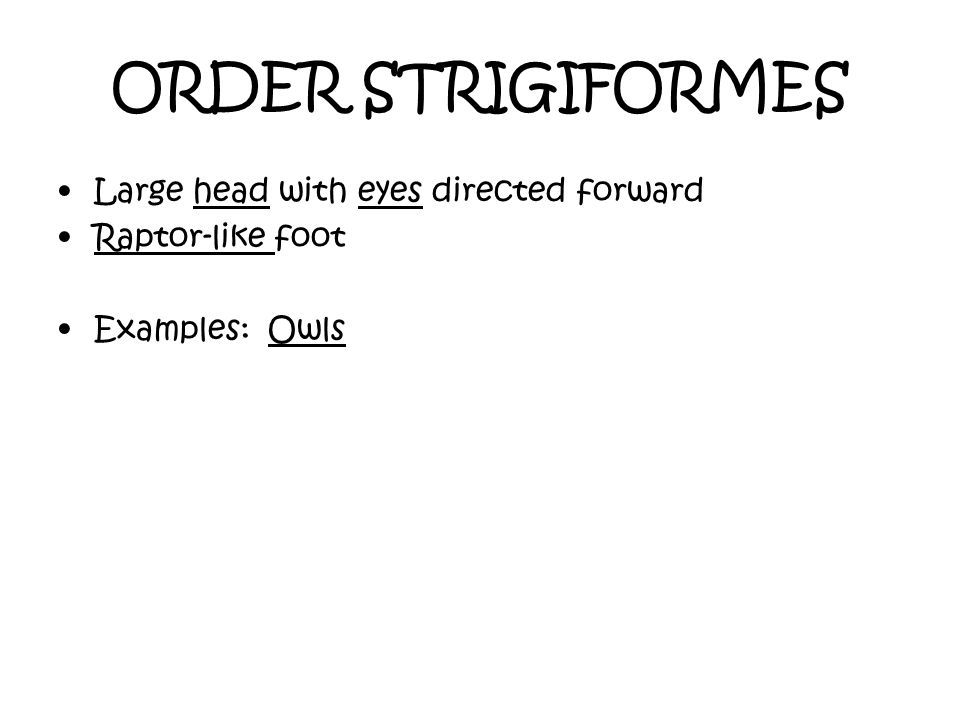 ORDER STRIGIFORMES Large head with eyes directed forward Raptor-like foot Examples: Owls
