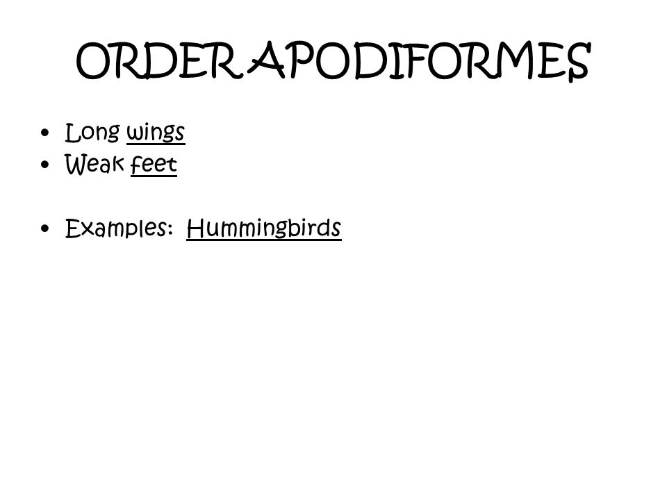 ORDER APODIFORMES Long wings Weak feet Examples: Hummingbirds