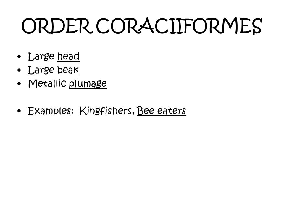 ORDER CORACIIFORMES Large head Large beak Metallic plumage Examples: Kingfishers, Bee eaters