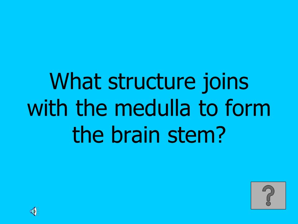 What structure joins with the medulla to form the brain stem?