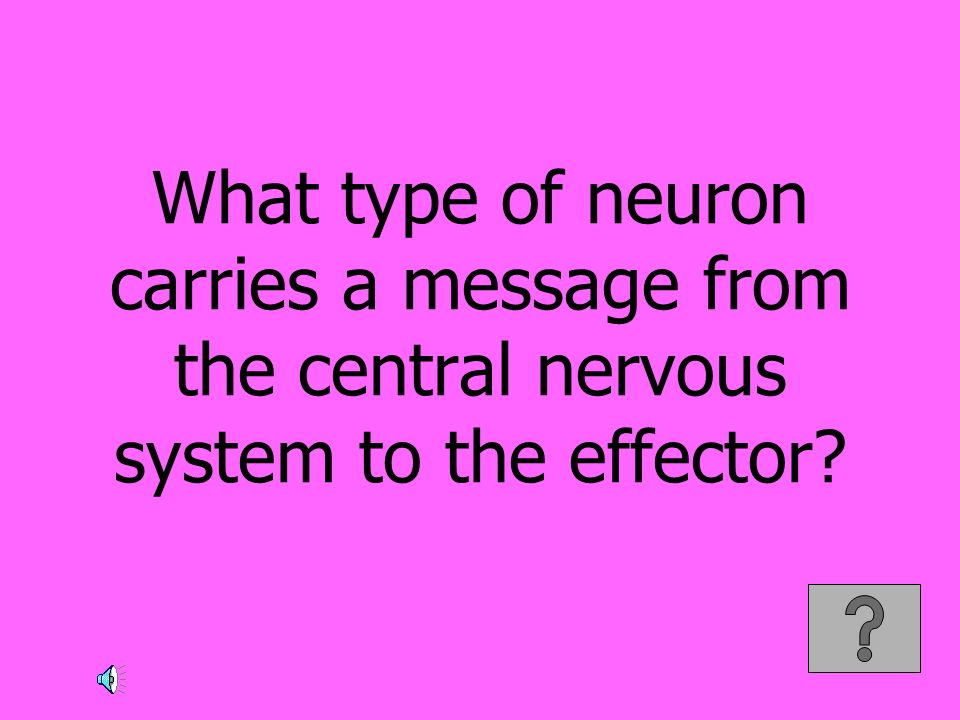 What type of neuron carries a message from the central nervous system to the effector?