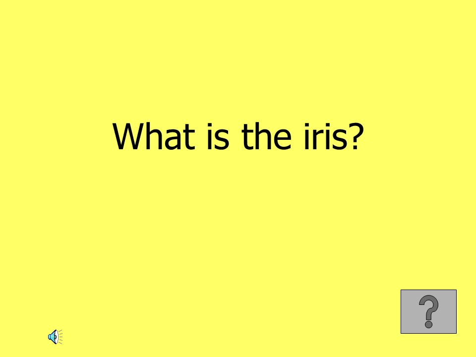 What is the iris?