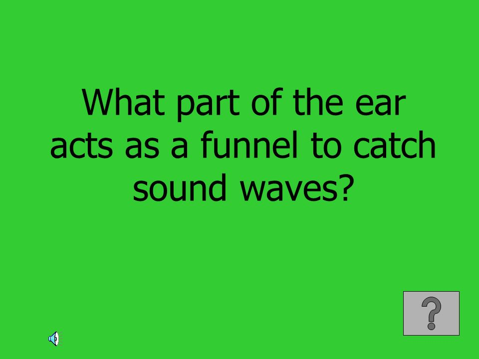 What part of the ear acts as a funnel to catch sound waves?