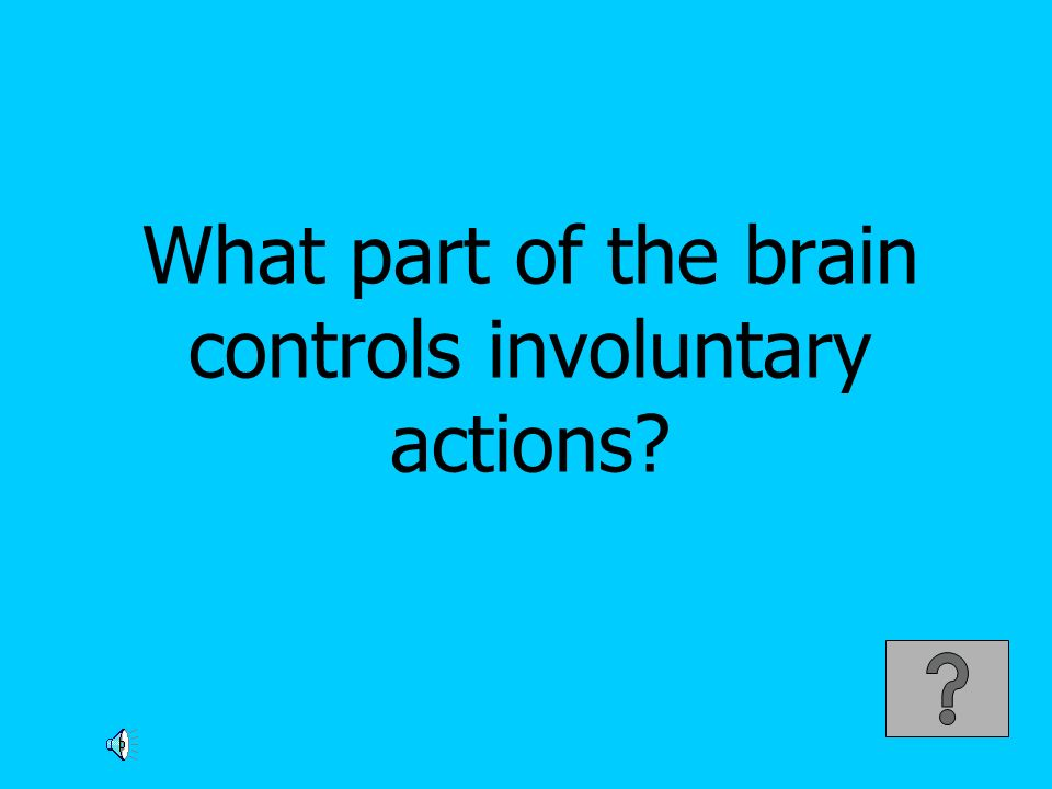 What part of the brain controls involuntary actions?
