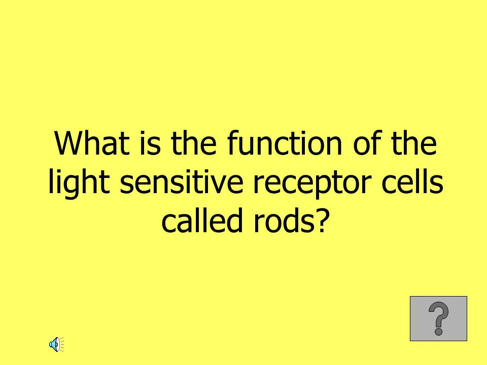 What is the function of the light sensitive receptor cells called rods?
