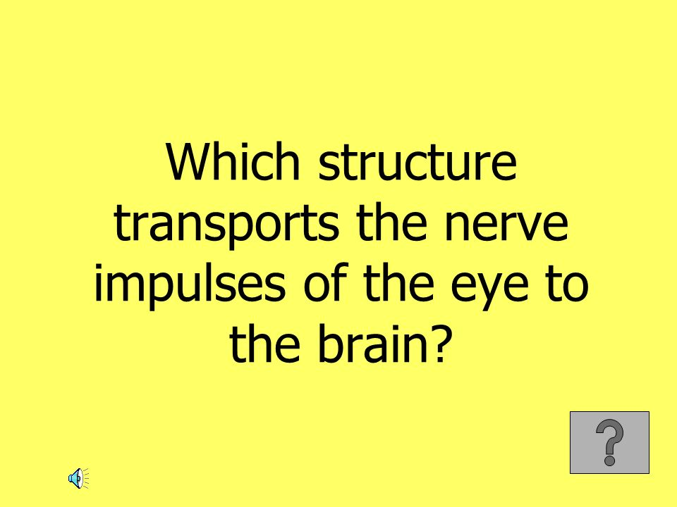 Which structure transports the nerve impulses of the eye to the brain?