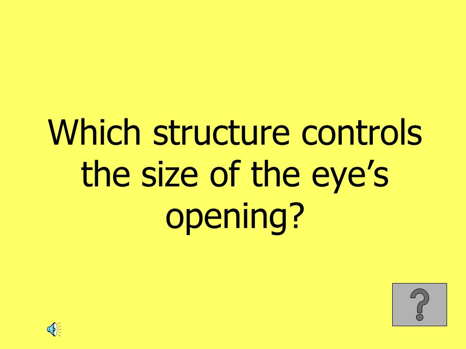 Which structure controls the size of the eyes opening?