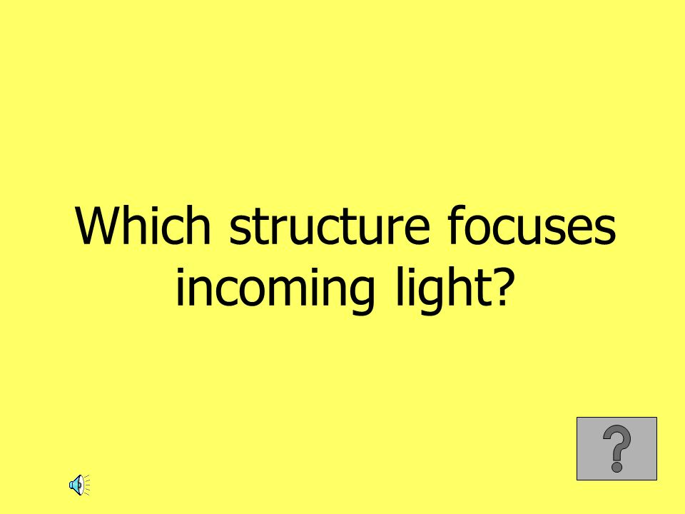 Which structure focuses incoming light?