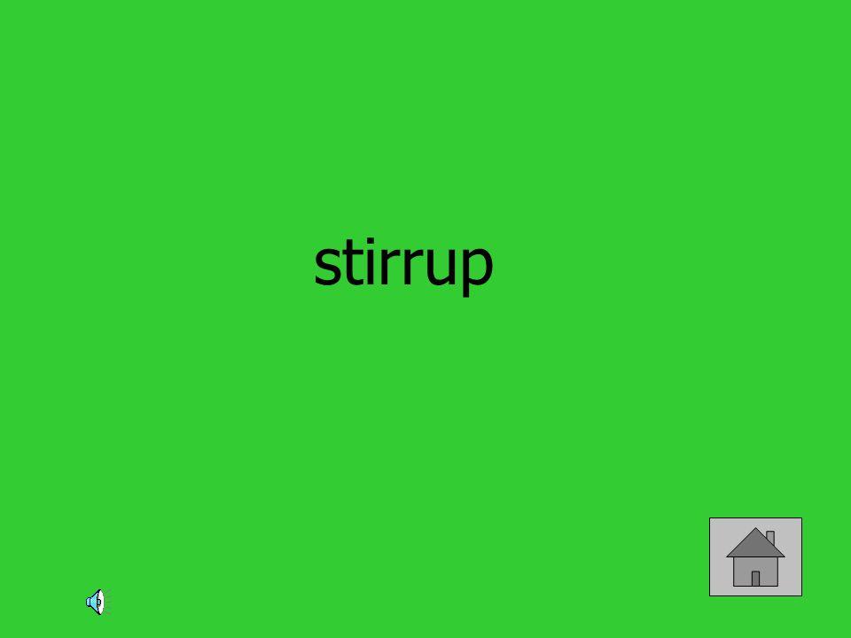 stirrup