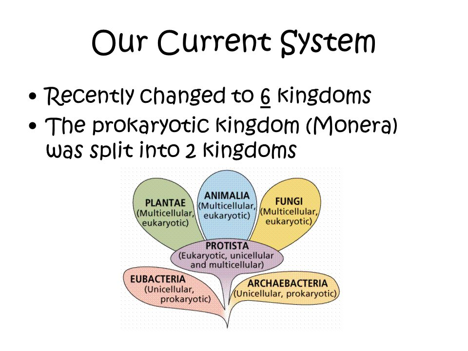 Our Current System Recently changed to 6 kingdoms The prokaryotic kingdom (Monera) was split into 2 kingdoms