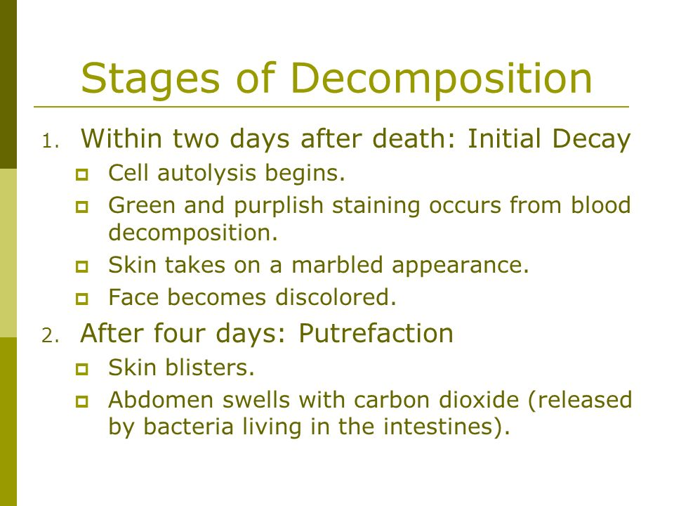 Stages of Decomposition 1. Within two days after death: Initial Decay Cell autolysis begins. Green and purplish staining occurs from blood decompositi