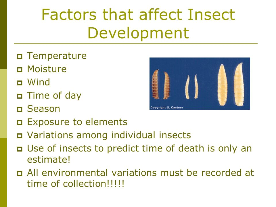 Factors that affect Insect Development Temperature Moisture Wind Time of day Season Exposure to elements Variations among individual insects Use of in