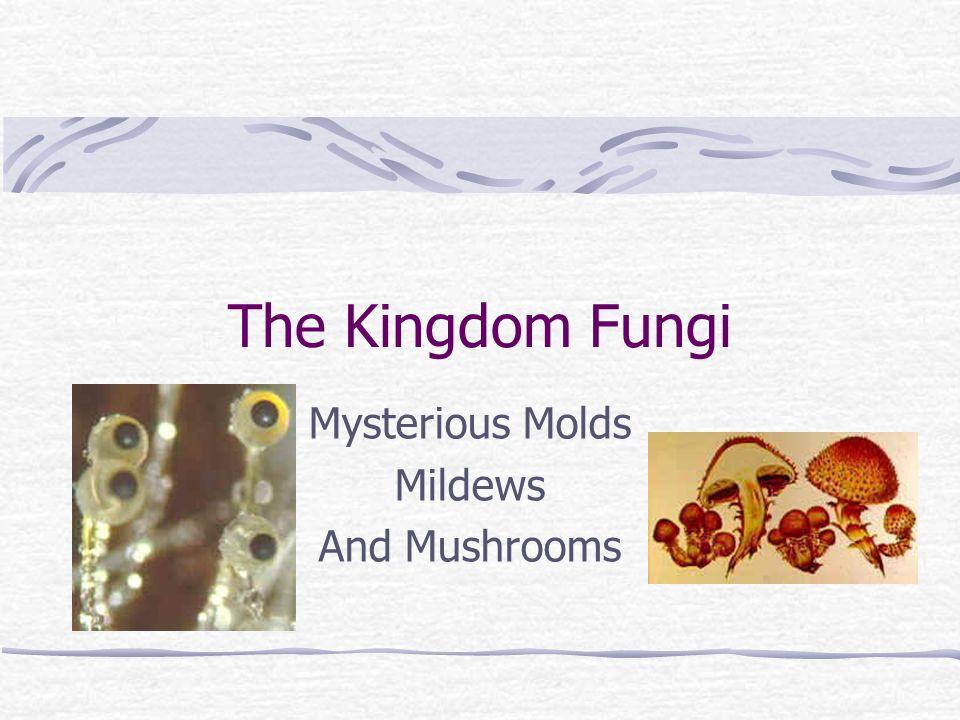 The Kingdom Fungi Mysterious Molds Mildews And Mushrooms