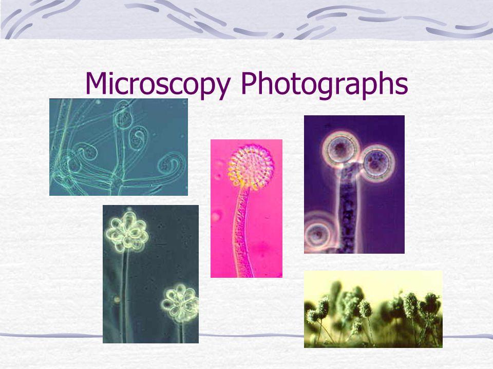 Microscopy Photographs