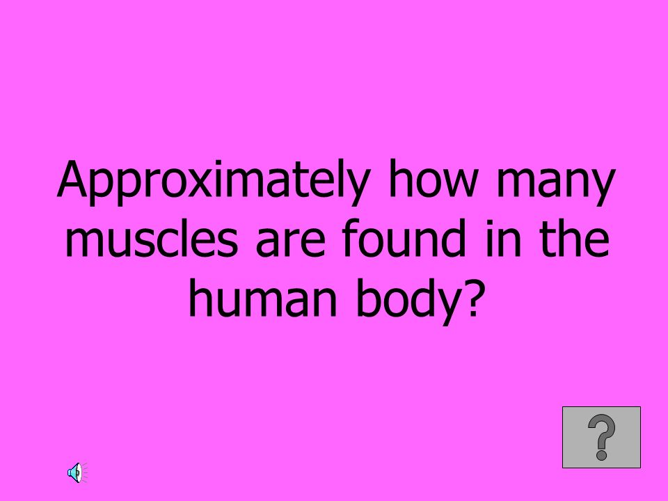 Approximately how many muscles are found in the human body?