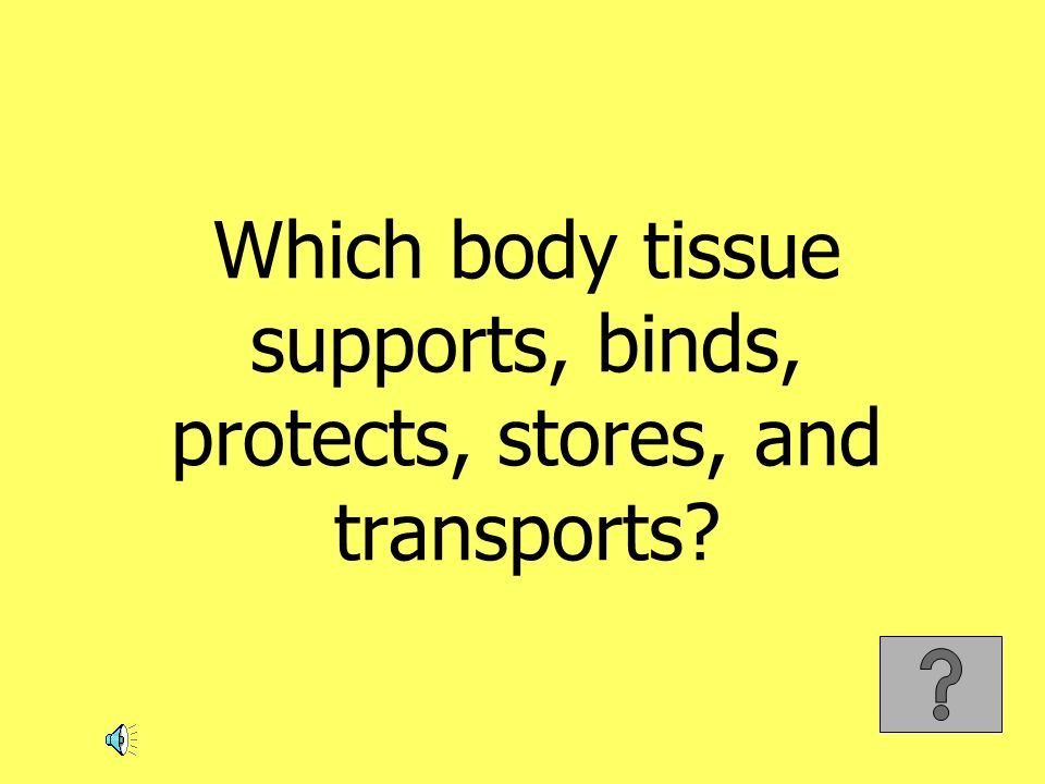 Which body tissue supports, binds, protects, stores, and transports?