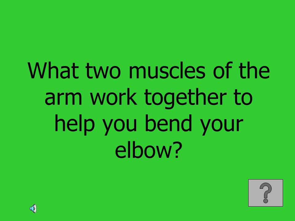 What two muscles of the arm work together to help you bend your elbow?