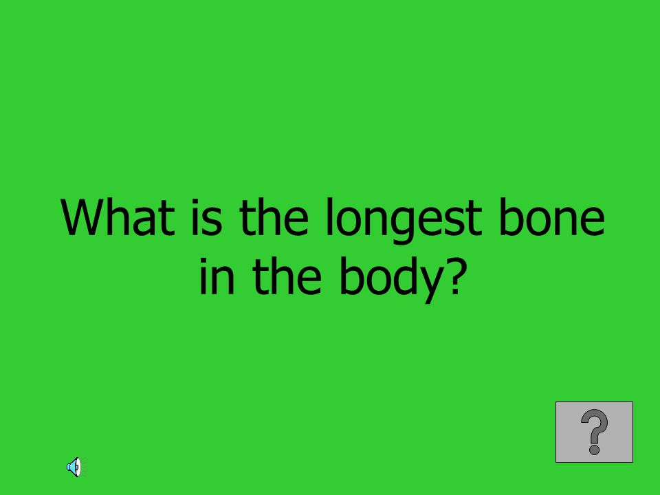 What is the longest bone in the body?